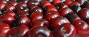 A lot of ripe juicy cherries macro royalty free stock photo