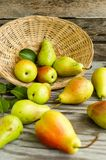 Lot of ripe pears spilled out of a basket Stock Photos