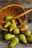 Lot of ripe pears spilled out of a basket Royalty Free Stock Photo