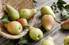 Lot of ripe pears spilled out of a basket Stock Images
