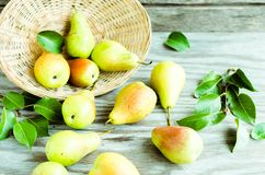 Lot of ripe pears spilled out of a basket Stock Photography