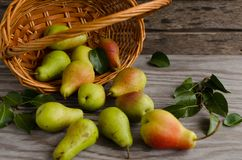 Lot of ripe pears spilled out of a basket Stock Photo