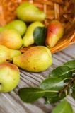 Lot of ripe pears spilled out of a basket Royalty Free Stock Image