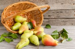 Lot of ripe pears spilled out of a basket Royalty Free Stock Photos