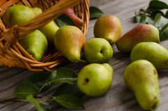 Lot of ripe pears spilled out of a basket Royalty Free Stock Images