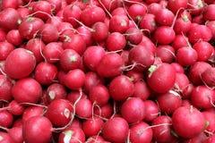 A lot of ripe radish. A lot of red radish, harvesting Stock Photos