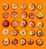 A lot of ripe red apples Stock Photos