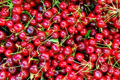 A lot of ripe and sweet cherries on the counter royalty free stock images