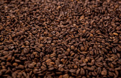 A lot of roasted coffee beans. Close-up Royalty Free Stock Photos