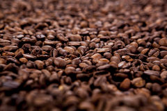 A lot of roasted coffee beans. Close-up Stock Image