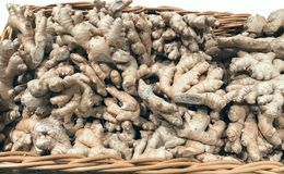 Lot of roots ginger lies in the basket. Lot of roots ginger lies in basket Royalty Free Stock Photo