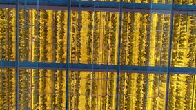 Many rows of the plants under the phyto lamps, inside the greenhouse. A lot of rows of the plants under the phyto lamps, shot from outside, aerial shot stock footage