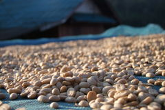 Lot's airing of coffee. Bean Royalty Free Stock Photos