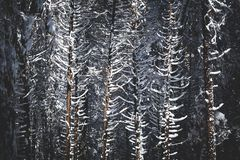 Snow covered trees in a winter wonderland landscape background. Lot`s of snow in the Sierra mountains in California cover the redwood / pine trees stock photography