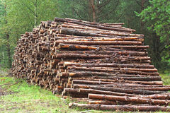 A lot of sawn timber Royalty Free Stock Photography