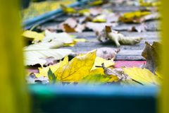 A lot of scattered dry autumn leaves Royalty Free Stock Photo