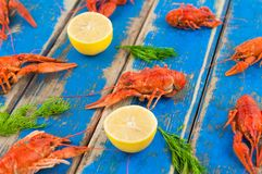 Lot of scattered whole red boiled crawfish and twigs of dill and two half of fresh lemon. On old rustic blue wooden planks royalty free stock photo