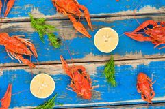 Lot of scattered whole red boiled crawfish and twigs of dill and two half of fresh lemon. On old rustic blue wooden planks stock photography