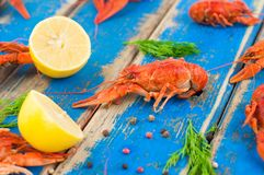 Lot of scattered whole red boiled crawfish and twigs of dill and two half of fresh lemon and pepper. On old rustic blue wooden planks royalty free stock image
