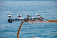 A lot of sea gulls Stock Photography