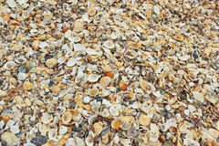 A lot of sea shells nature background. Nature pattern of beautiful multicolored seashells on the beach. Vacation concept Stock Photo