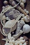 A lot of sea shells and perls in art mess. Close up Stock Photography