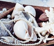 A lot of sea shells and perls in art mess. Close up Stock Image