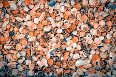 Lot of sea shells Stock Photo