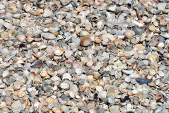 A lot of seashells Stock Photography