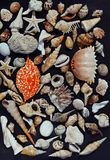 Lot of seashells on setout together with crab Stock Photography