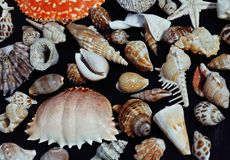 Lot of seashells on setout together with crab Stock Image