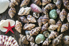 A lot of seashells Stock Photo