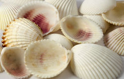 Lot of see shells Stock Photos