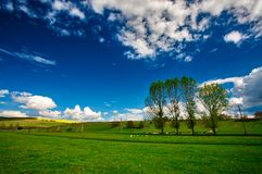 A lot sheep. On the beautiful green meadow royalty free stock photo