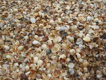 A lot of shells on the beach Stock Photo