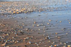 A lot of shells on the beach with waves. A lot of sea shells on the beach with waves royalty free stock photo