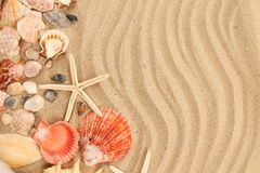 Lot of shells and seastars on sandy background Stock Photos