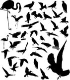 Lot of silhouettes of birds. Lot of vector silhouettes of birds stock illustration