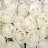 lot of small beige roses Stock Images