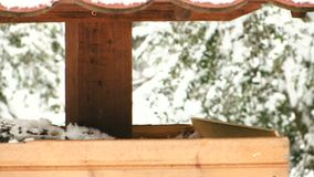 A lot of small birds on the feeder. Come and go on a snowy day stock video footage