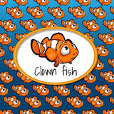 A lot of small clown fish, card texture gradient. With oval frame space for text and clown fish close up Stock Images