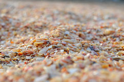 A lot of small sea shells on the sea shore. Close-up texture for background seashells on the shore Royalty Free Stock Image