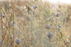 A lot of snails on the dry grass Stock Photo