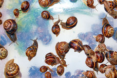It is a lot of snails on opaque glass Royalty Free Stock Photos