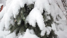 A lot of snow on the fir stock video footage