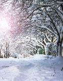 A lot of snow in park at winter time. Winter concept backgroung with a lot of snow Royalty Free Stock Photo
