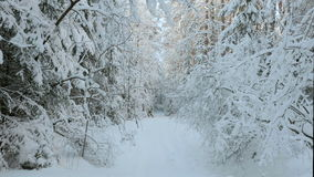 A lot of snow in the winter forest.  stock footage