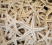 Lot of starfishes different sizes Royalty Free Stock Photo