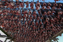 A lot of stockfish ! Royalty Free Stock Photo
