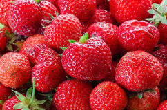 It is a lot of strawberry berries. A summer garden crop Stock Image